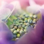 urania_flower1-150x150